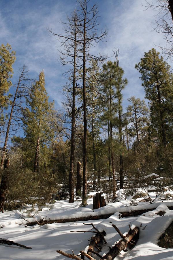Cherry Creek Trees