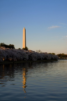 THe Washington Monument, with cherry blossoms and the Tidal Basin in the foreground