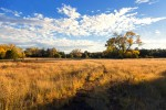 Ft. Bayard Meadow