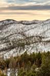 Black Range Winter