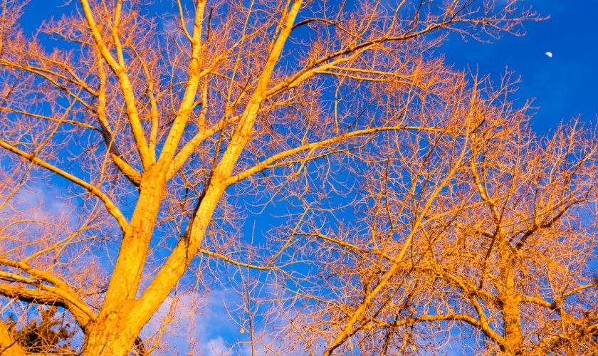 The sunset glow against the tree limbs.