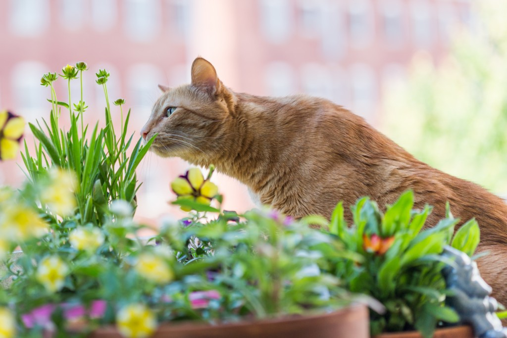 Out kitten Nutmeg was enamored with the flowers Meredith planted this weekend, though we of course had to shoo her away before she could eat any of them.